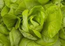 新鲜的绿色莴苣salat健康食物顶视图 免版税库存图片
