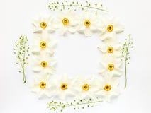 新鲜的水仙花和hepherd的钱包花卉边界  免版税库存照片