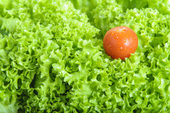 新鲜的莴苣和蕃茄 免版税库存照片
