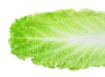 新鲜的莴苣/在白色背景隔绝的一片叶子 免版税图库摄影