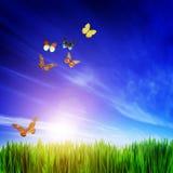 新鲜的绿草、飞行的蝴蝶和蓝天 库存照片