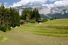 新鲜的绿草在山包围的高山草甸。 图库摄影