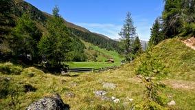 新鲜的绿草在森林和山包围的高山草甸。 免版税库存图片