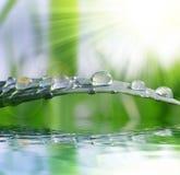 新鲜的绿草用水投下特写镜头 库存图片