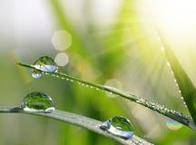 新鲜的绿草用水投下特写镜头 库存照片