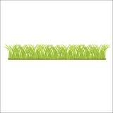 新鲜的绿草行您的 免版税库存照片