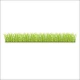 新鲜的绿草行您的 图库摄影