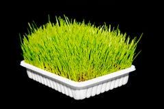 新鲜的绿草 免版税库存图片