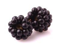 新鲜的黑莓 免版税图库摄影