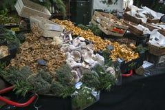 新鲜的黄蘑菇 库存图片