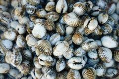 新鲜的贝类血液鸟蛤 免版税图库摄影