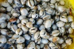 新鲜的贝类血液鸟蛤 免版税库存照片