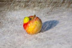 新鲜的appla在雨中 库存照片