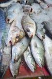 新鲜的Fishs 库存照片