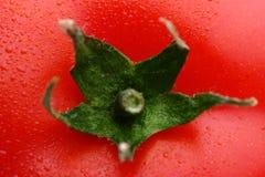 新鲜的grapa蕃茄 库存图片