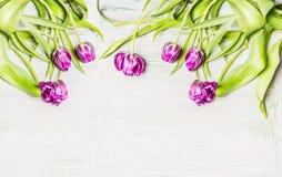 新鲜的lila郁金香,在白色木背景的花边界, 免版税库存照片