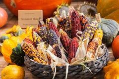 新鲜的multicoloredcorn菜 免版税库存图片