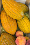新鲜的Rockmelons 免版税库存照片