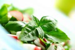 新鲜的salat蔬菜 免版税库存图片