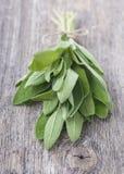 新鲜的Salvia 免版税库存图片