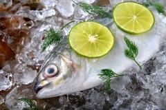 冻新鲜的trevally鱼 库存图片