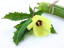 新鲜秋葵果子Abelmoschus esculentus在绿色叶子和切片在白色背景 免版税库存照片