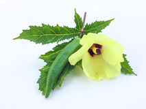 新鲜秋葵果子Abelmoschus esculentus在绿色叶子和切片在白色背景 图库摄影