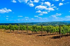 新鲜空气和美丽的葡萄园 免版税库存图片