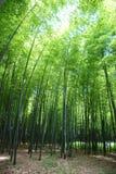 新鲜竹的森林 图库摄影