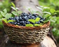 新鲜篮子的蓝莓 免版税库存照片