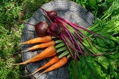 新鲜红萝卜和甜菜在一个老树桩 免版税库存照片