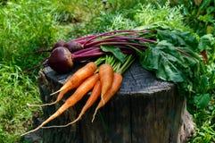 新鲜红萝卜和甜菜在一个老树桩 免版税库存图片