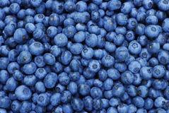 新鲜背景的蓝莓 库存图片