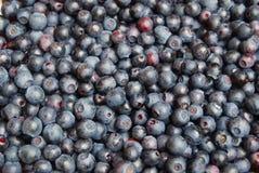 新鲜背景的蓝莓 免版税库存照片