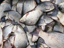 新鲜背景的鱼 免版税图库摄影