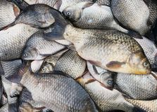 新鲜背景的鱼 免版税库存图片