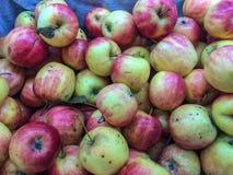 新鲜苹果的背景 免版税库存图片