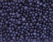新鲜蓝莓 免版税图库摄影