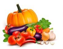 新鲜蔬菜。 健康食物。 库存图片