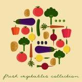 新鲜蔬菜传染媒介集合 免版税库存照片
