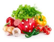 新鲜蔬菜用在喷壶的绿色草本 免版税库存照片
