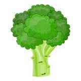 新鲜蔬菜硬花甘蓝被隔绝的象 免版税库存图片