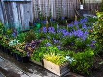 新鲜被浇灌的庭院 免版税库存照片