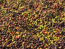 新鲜豆的咖啡 免版税库存图片
