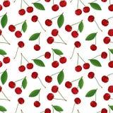 新鲜,成熟,多汁樱桃的无缝的样式与叶子的在颜色 皇族释放例证