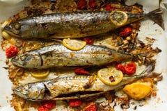 新鲜,芬芳从烤箱拉扯了鲭鱼用柠檬、蕃茄和草本 免版税库存图片