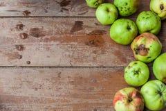 新鲜水果培养自己 库存照片