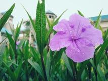 新鲜紫色花早晨 免版税库存照片