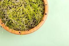 新鲜mircogreen在木碗的韭葱在浅绿色的背景 库存照片