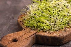 新鲜mircogreen在葡萄酒cuttig板的韭葱 库存图片